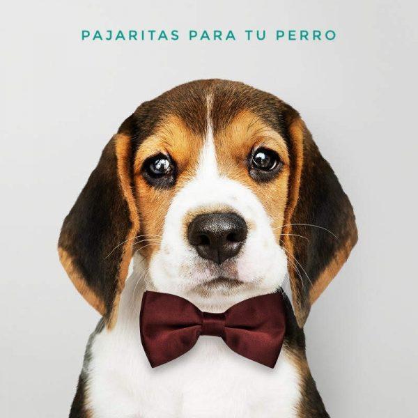 Pajarita para perro